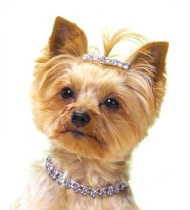 Pet jewelries